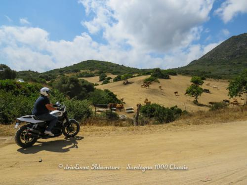 IMG 0406-Sardegna-1000-Classic-Reco-2017